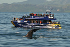Tourism operators such as Kaikoura Whalewatch have been affected by the earthquakes.