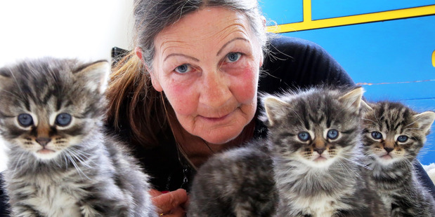 Robyn Dandy with four abandoned kittens, one still needing a home. Photo/Stuart Munro