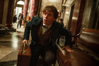 Fantastic Beasts and Where to Find Them. Photo / Supplied
