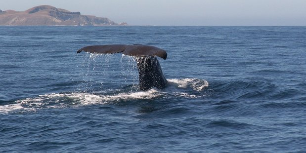 Tourist operations such as Whale Watch in Kaikoura will be hit by the quakes. Photo / Derek Clarkson.
