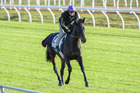 Shuttle stallion Vadamos will stand at Rich Hill Stud in the Southern Hemisphere. Photo / Getty Images