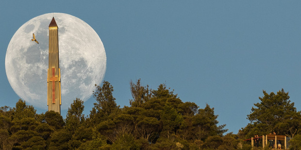 Whangarei photographer Ross Armstrong couldn't believe his luck when a hawk flew into shot as he lined up this rare supermoon and the war memorial on Mt Parihaka. Photo / Supplied