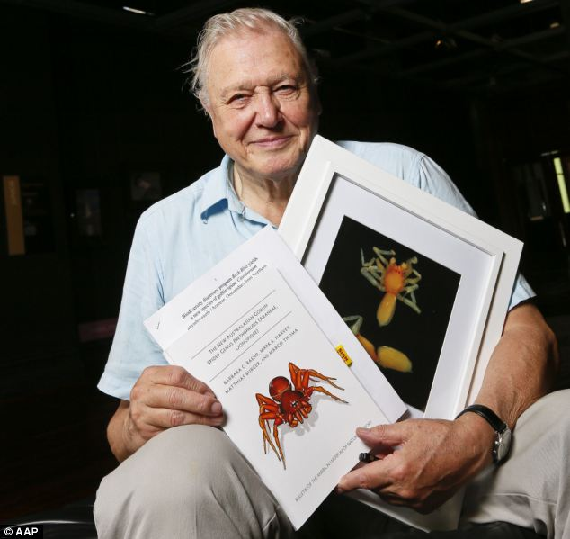 Sir David Attenborough with a photograph of the 'prethopalpus attenboroughi' spider at the museum. Photo / AAP