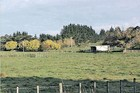 ROOMY: There is a shortage of opportunities for people seeking a bit of land in Hawke's Bay that is close to town, with room for a pony. PHOTO/FILE