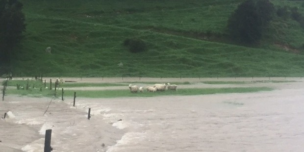 Sheep stranded at Tunakino Valley where the jet boat adventure took place. Photo / Supplied