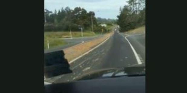 Loading The trail of 4km offal between Kaiwaka and Wellsford. Photo / via video