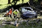 A falling tree has damaged cars at Auckland's Cornwall Park