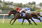 For a mare with her record, Celebrity Miss does look particularly well placed on the minimum 53kg. Photo / NZ Racing desk
