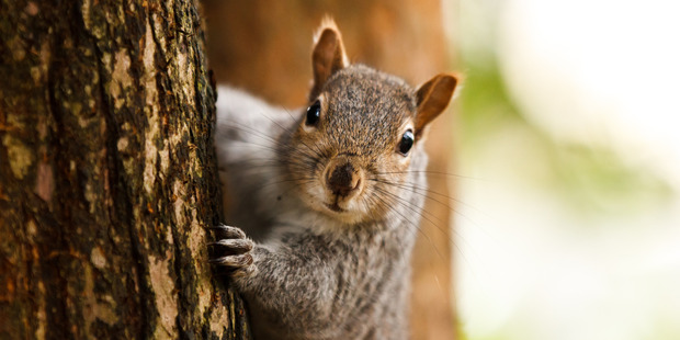 Mr Brookins described the accident with the squirrel as being the closest he has ever come to dying. Photo / Getty Images
