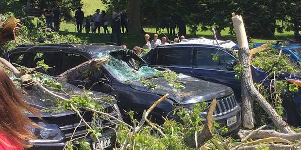 Cars crushed under the large tree which fell in Auckland's Cornwall Park on Sunday. Photo / Supplied