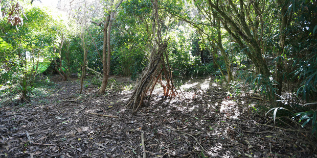 An area in the bush at Orakei Reserve which may have been of interest to the police. Photo / Doug Sherring