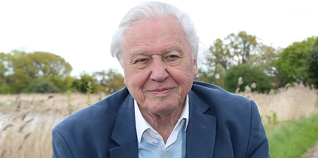 Sir David Attenborough. Photo / AP