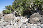 An area on Kapiti Island where human skeletal remains were found last month.