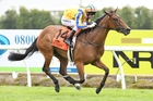 I Am Poppy will run at Whanganui on Saturday. Photo / Race Images