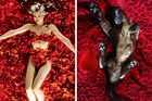Here one of the couple's two cats reenacts Angela from American Beauty lying naked among red rose petals. Photos / Supplied, Movie Cats Instagram