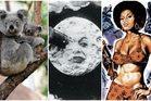 Koalas, blaxploitation and silent cinema: three treats from the world beyond Netflix. Photo / Daily Telegraph UK