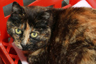 Pipi is a friendly cat looking for a home.