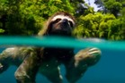 A swimming sloth on Planet Earth II. Photo / BBC
