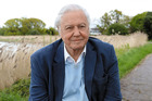 Sir David Attenborough. Photo / Getty Images