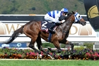 Rasa Lila will be a leading hope in the Captain Cook Stakes. Photo / Race Images