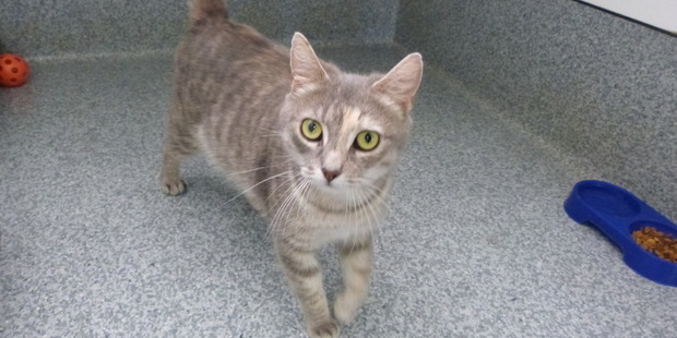 Quinn is a laid-back cat looking for a home.