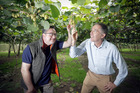 Sharing: Italian grower Fabio Ippoliti and Zespri's Craig Thompson at Baygold orchard, Paengaroa. Photo/Andrew Warner