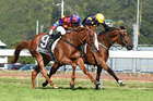 Mister Impatience (inside) in the Wellington Cup. Photo / Racing Images