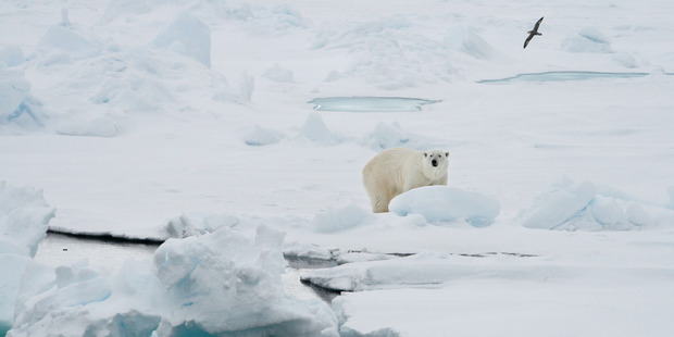 The major game-changer is the sea ice in the Arctic.  Photo / AP