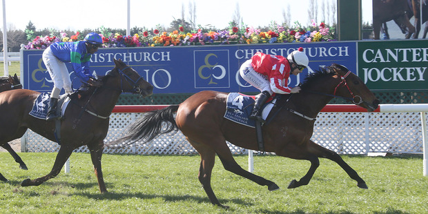 Michael and Matthew Pitman are expecting to be regular North Island visitors in the coming months. Photo / NZ Racing desk