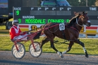 A strong showing at Bunbury tonight will help Franco Nelson qualify for the Inter Dom grand final. Photo / Peter Meecham