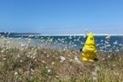 UP NORTH: This week the Far North District Council's CDEM gnome is - where? PICTURE/FNDC