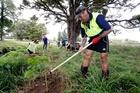 Hone Rameka gets stuck into some planting. Photo / John Stone