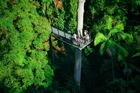 O'Reilly's Tree Top Walk lets you wander through the canopy suspended 15m above the ground. Photo / Tourism and Events Queensland