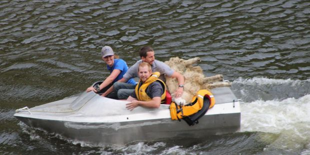Mission accomplished: A two-hour rescue mission forthe stranded sheep. Photo / Christine McKay