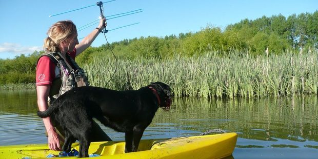 Emma Williams and Kimi, the first dog in New Zealand trained to look for bittern, search out radio-tagged birds. Photo John Cheyne