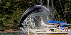 Dolphins delight Bay visitors