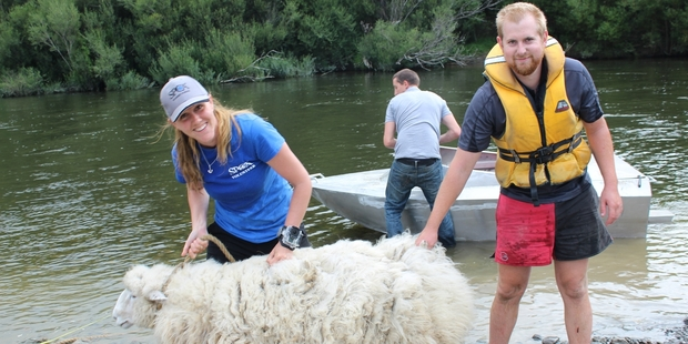 Laura Phillips,  Jason and Richard Scrimshaw, with Woolson, the rescued ram landed at the Gorge Reserve next to the Ballance Bridge on Thursday night.