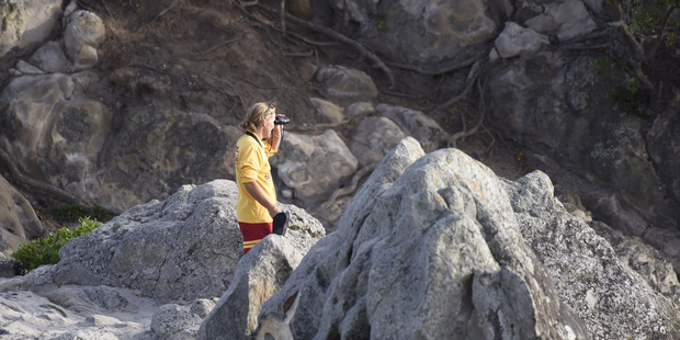 An estimated 150 surf club members searched for Hamish. Photo / George Novak, Bay of Plenty Times