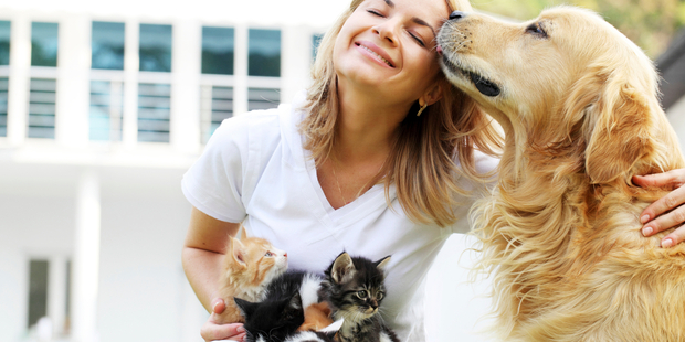 People's cats do love them. They just don't love them nearly as much as a dog does. Photo / iStock