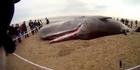 Watch: Sperm whales wash up on UK beach