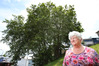 TREES: Former Tauranga City councillor Mary Dillon has launched a bid to save two mature trees which are due to be felled. PHOTO JOHN/BORREN