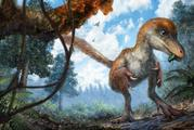 The dinosaur is a small-sized relative of the T-Rex. Photo /  Chung-tat Cheung