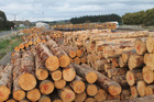 The demand for logs in China is set to ramp up prices for the long term.