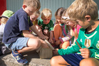 Pupils building a bird-house at Island Bay Primary School, which was one of the last to accept the 2010 introduction of National Standards. Photo / Mark Mitchell