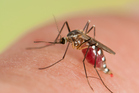 Insect repellents can keep biting mosquitoes at bay but they've got to be used correctly. Photo / Getty Images