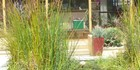 250116JSgarden AMBLE: A garden in Taranaki St. PICTURE / JOAN STREET