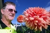Napier dahlia grower John McCutcheon with one the giants of the species which escaped damage from last week's rainstorm. Photo / Paul Taylor