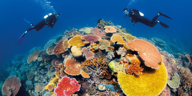 Scuba diving on the Great Barrier Reef in Australia. Photo / Tourism and Events Queensland