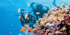 Scuba diving on the Great Barrier Reef. Photo / Tourism and Events Queensland