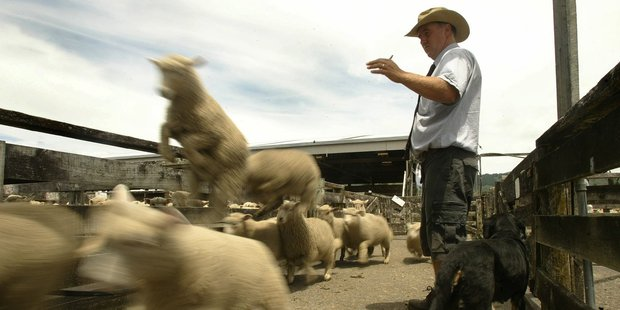 The value of TPP to the Kiwi farmer is obvious, wiping $72 million of tariffs on meat exports alone. Photo / Alan Gibson